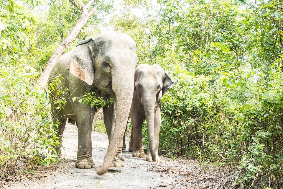 Elephants in Sri Lankan jungle
