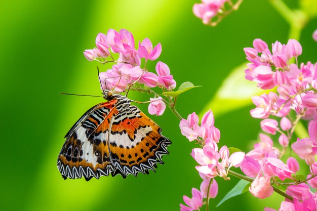 beautiful-butterfly-sitting-branch-with-small-pink-flowers