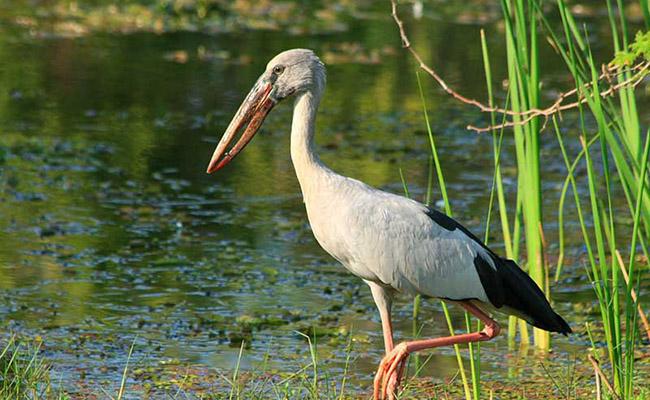 birds in sri lanka 2