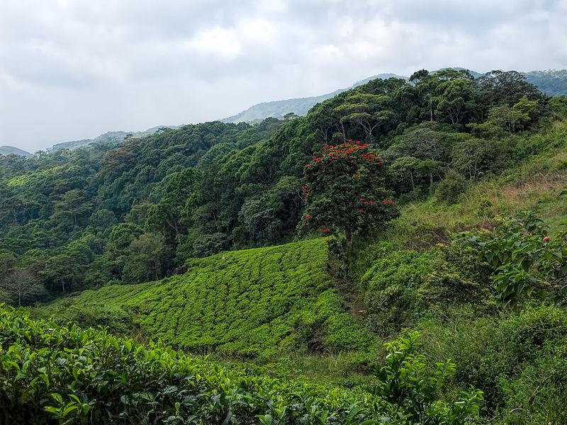 Sinharaja_Forest_Preserve