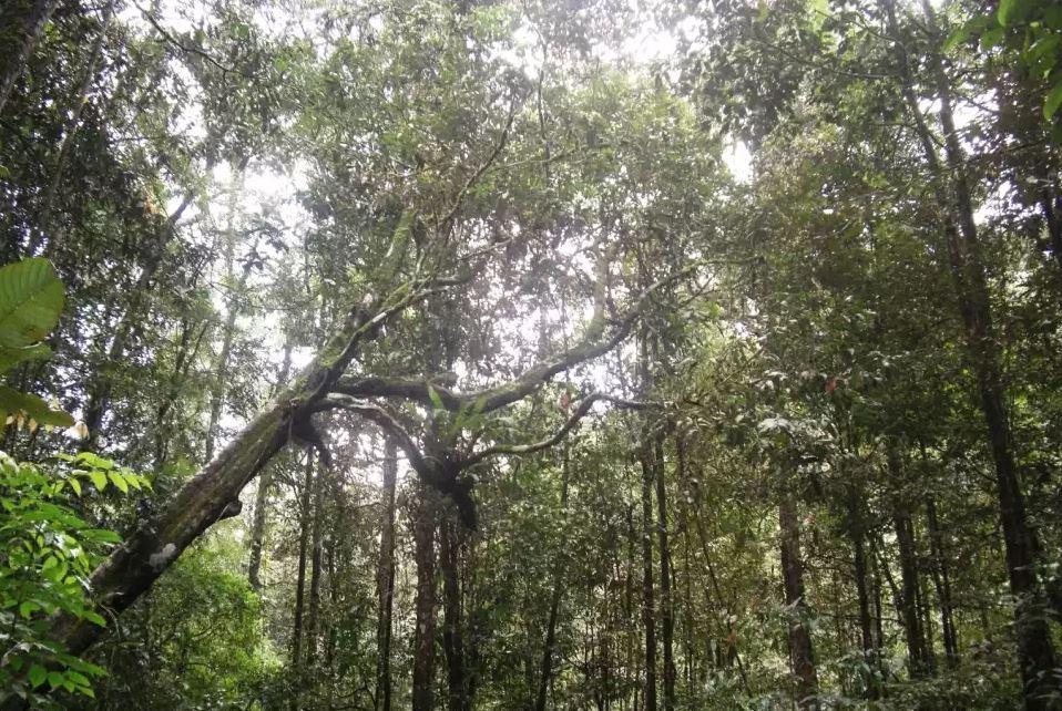 Sinharaja_jungle_in