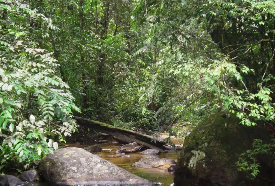 Sinharaja_jungle_rain_forest