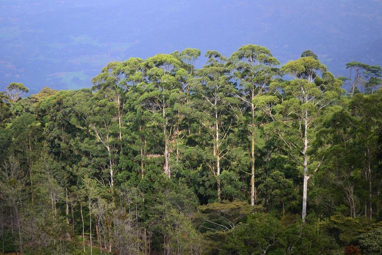 forests Sri lanka