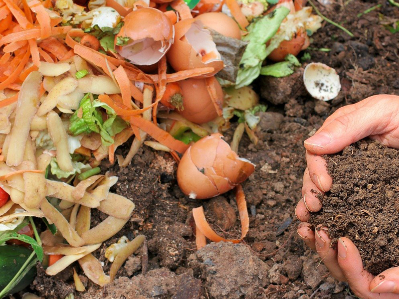 Composting-sri lanka